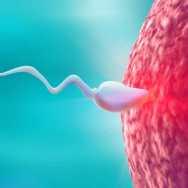 Profmed_Foods_for_strong_sperm_featured